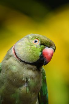 Free Green Parrot Stock Photos - 14936023