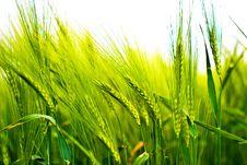 Free Wild Plant Stock Image - 14936291