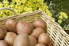 Free Potatoes In Basket Royalty Free Stock Photography - 14936307