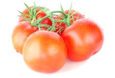 Free Tomatoes Stock Photos - 14936343