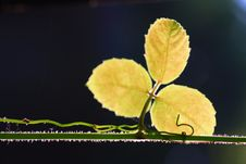 Free Shadow Tree Stock Images - 14936384