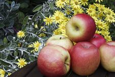Free Apples In Garden Stock Photos - 14936713
