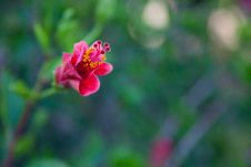 Free Red Flower Stock Photography - 14937042