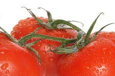 Free Tomatoes Stock Photo - 14937670
