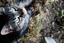 Free Gray Tabby In Grass Stock Photo - 14937780
