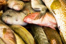 Pile Of Fish Royalty Free Stock Images