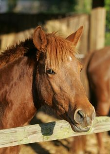 Free Pony 1 Stock Photos - 14938103