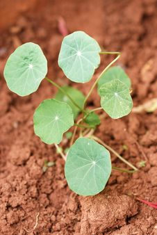 Free New Seedling Stock Photography - 14938462