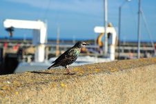 Free Bird On The Parapet Stock Images - 14938654