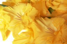 Free Closeup Of Iris Blooms - Horizontal Stock Image - 14938801