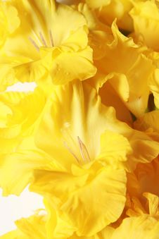 Free Closeup Of Iris Blooms - Vertical Royalty Free Stock Photo - 14938845