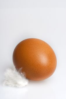Free Brown Egg Stock Photography - 14939682