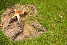 Free Stump And The Grass Royalty Free Stock Photo - 14939825