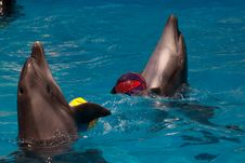 Free Dolphins Stock Photos - 14939843