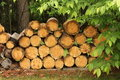 Free Stacked Firewood Stock Photo - 14942860