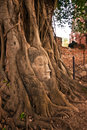 Free Buddha S Head In The Tree Royalty Free Stock Photography - 14943287