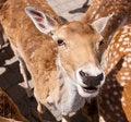 Free Friendly Deer Royalty Free Stock Photos - 14943388