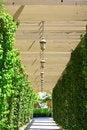 Free Garden Corridor Stock Photos - 14943663