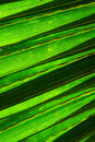 Free Tropical Leaf Texture Stock Photos - 14945613