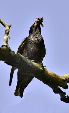 Free Bird Stock Photo - 14940240