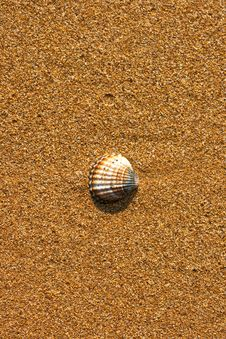 Free Scallop Shell On Beach Stock Image - 14941441