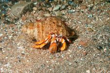 Free Hermit Crab Walking Stock Photos - 14942383