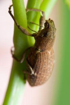 Free Beetle Climbing Up Stem Stock Image - 14942681