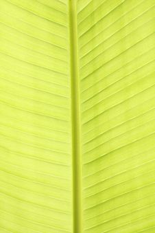 Free Green Leaf Texture Closeup Royalty Free Stock Photos - 14943558
