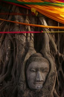 Free Buddha S Head In Banyan Tree Roots Stock Photography - 14945202