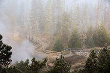 Misty Forest  Yellowstone National Park Stock Image