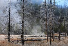 Free Misty Forest  Yellowstone Wyoming, United States. Royalty Free Stock Photo - 14945865