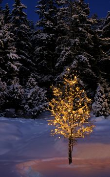 Free Illuminated Winter Tree Royalty Free Stock Photo - 14947115