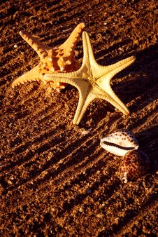 Free Starfishes And Cockleshells Stock Images - 14948084