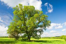 Free Landscape Stock Photography - 14949172