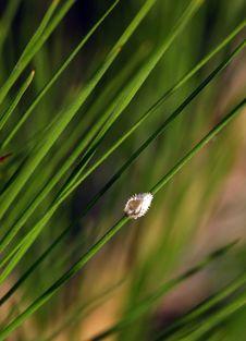 Free Small Beetle Stock Photo - 14949380