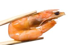 Free Shrimp Royalty Free Stock Photos - 14949758