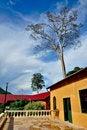 Free The Big Tree Stock Photos - 14953063