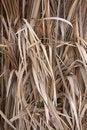 Free Dry Grass Stock Image - 14957681