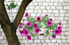 Free Garden Flowers Stock Photography - 14950272