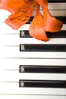 Free Lily On The Piano Royalty Free Stock Photo - 14950805