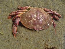 Free Crab In Aquinnah Beach Stock Photos - 14951553