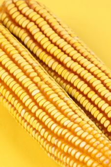 Free Corn Stick Royalty Free Stock Photo - 14951635