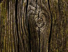 Old Tree Stump Royalty Free Stock Photo