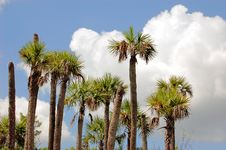Free Palm Trees And Clouds Stock Photo - 14953540