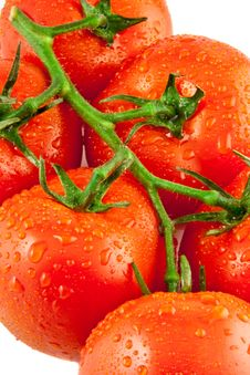 Free Red Fresh Tomatoes Royalty Free Stock Photos - 14954748