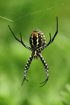 Creepy Spider Green Royalty Free Stock Photos
