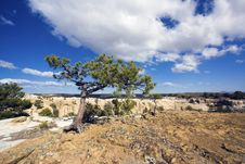 Free Lonely Tree In El Morro National Monument Stock Image - 14955681