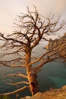 Free Stale Tree... Stock Photo - 14955760