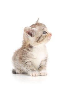 Free Kitten On A White Background Stock Image - 14957351