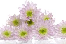 Free Flower Royalty Free Stock Photography - 14958707